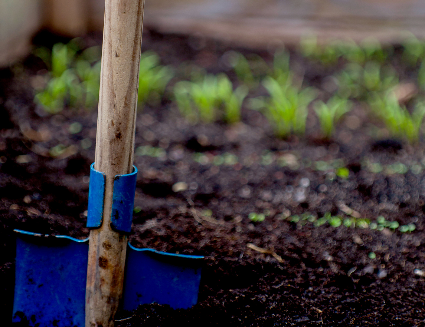 Image: close up of blue spade in garden bed. Photo source: Markus Spiske, Unsplash