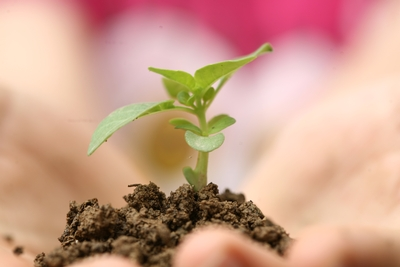Close up of hands holding a seedling in dirt.
