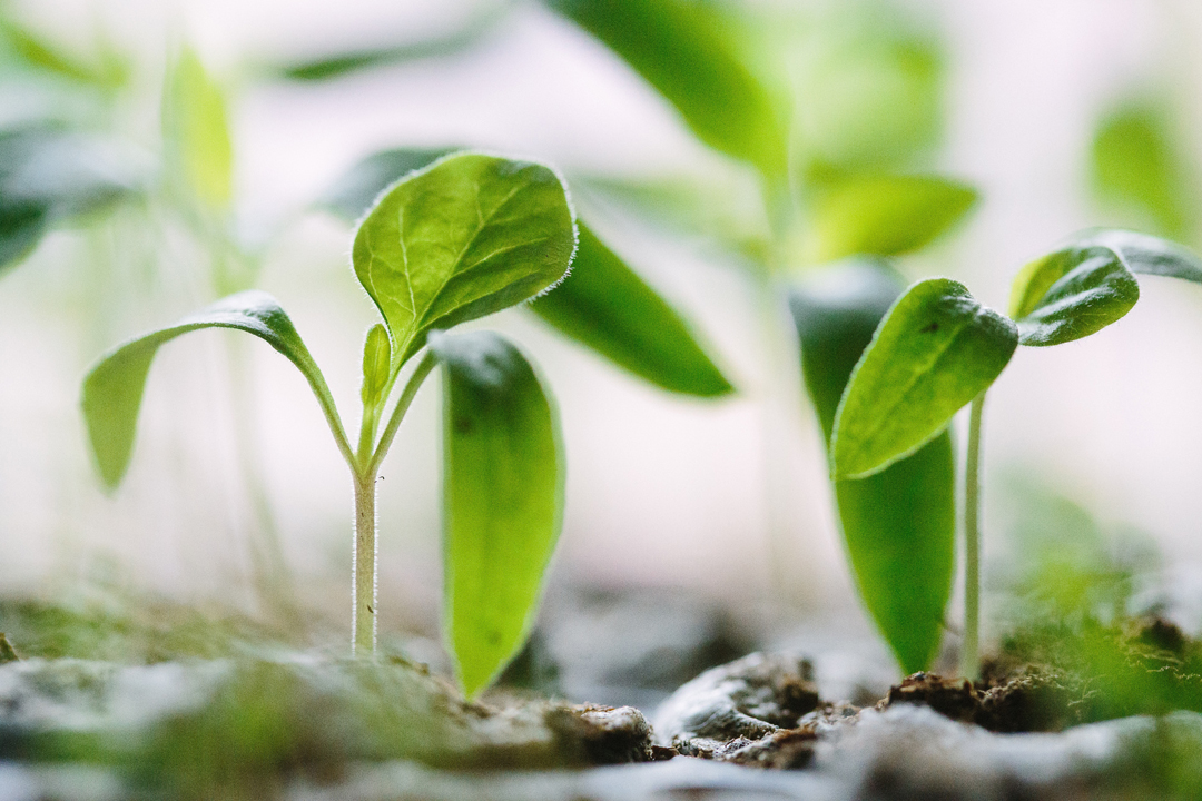 Image of seedlings in pots. Photo Source: Francesco Gallarotti, Unsplash
