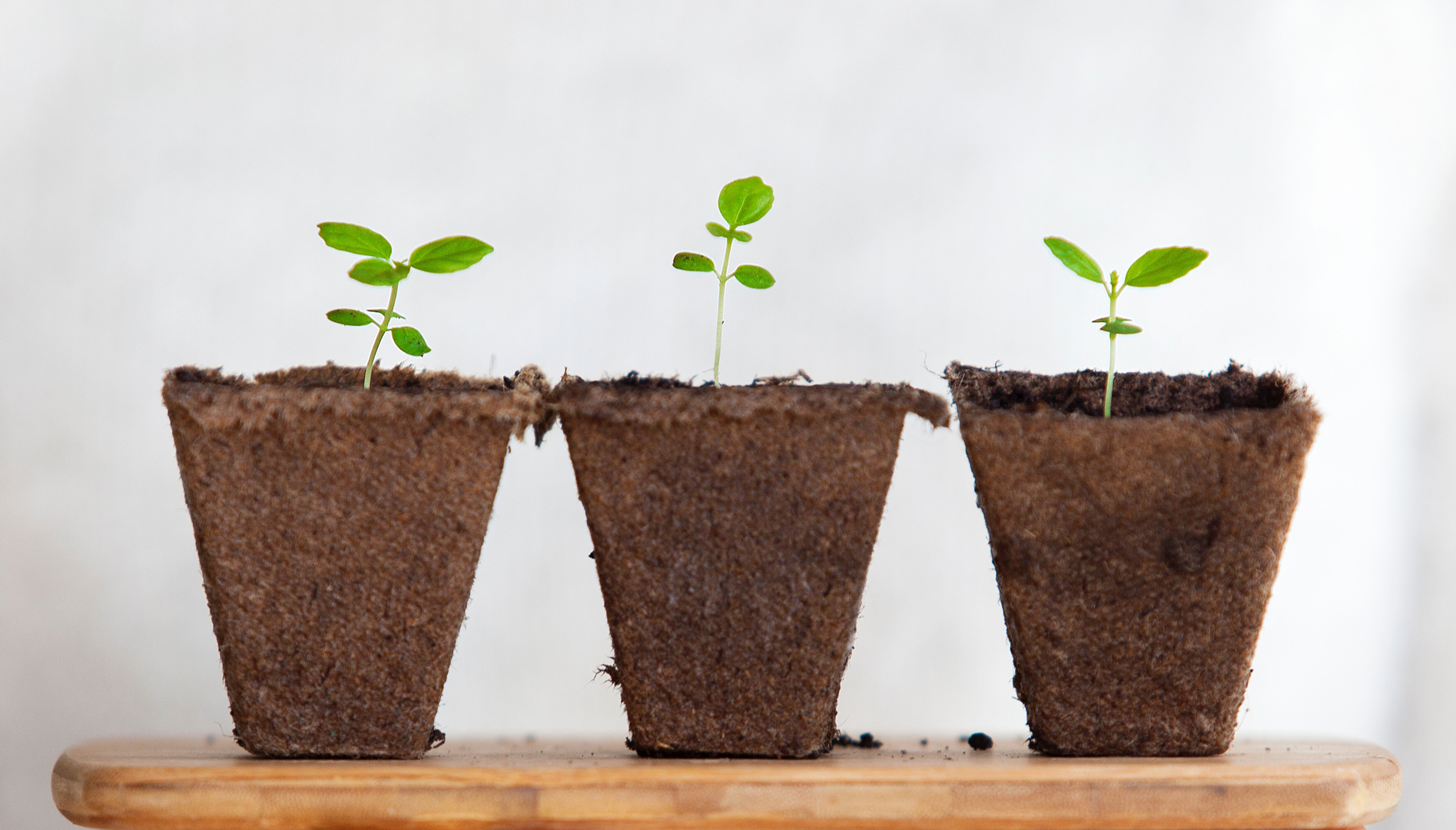 Image of three seedlings on wooden board. Photo source: Daniel Hjalmarsson, Unsplash