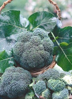 Image of broccoli florets in a basket.