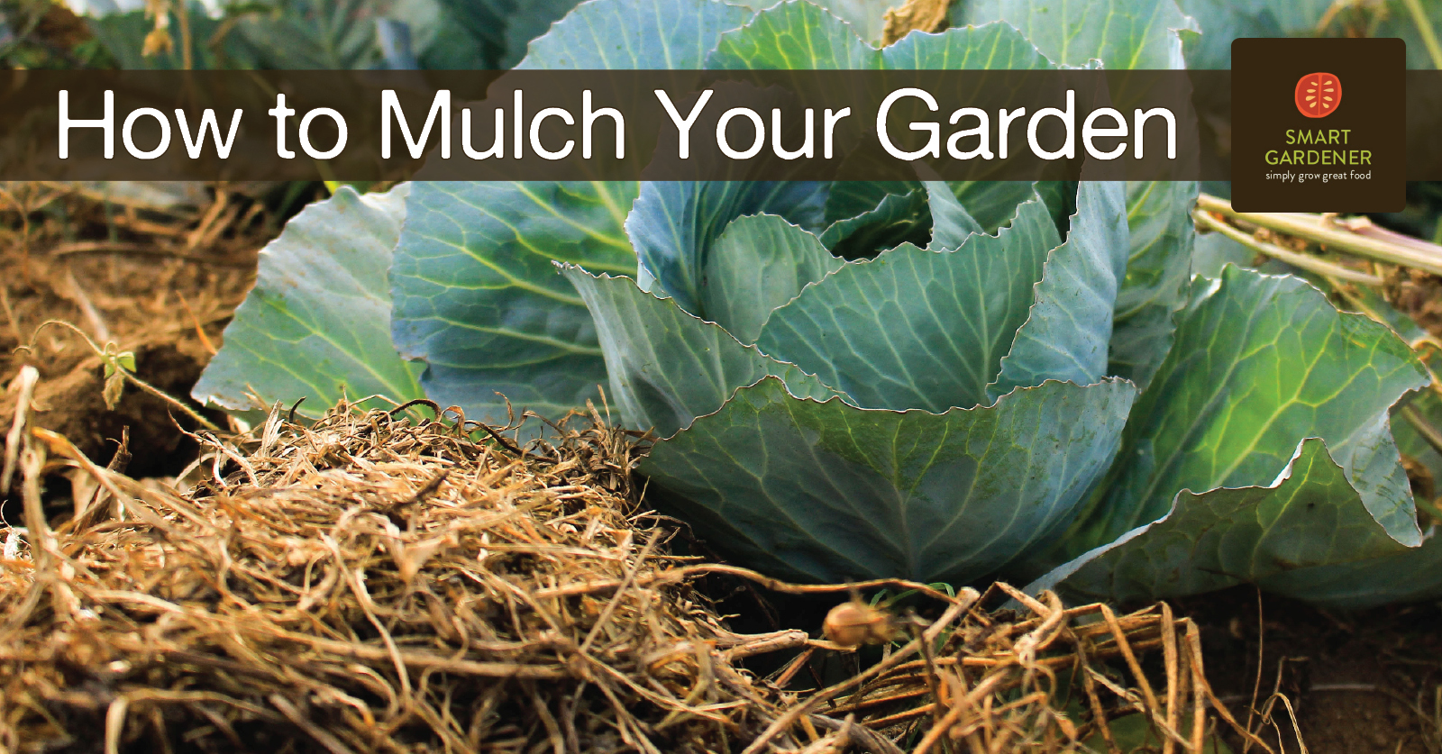 "Image of a cabbage with straw mulch around it, with the text ""How to Mulch Your Garden"" and the Smart Gardener logo"