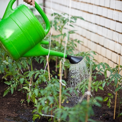 Essentials of watering