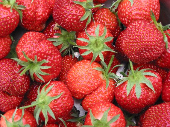 Top Ten Plants for a Beginner Garden: Strawberries