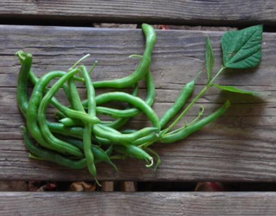 Top Ten Plants for a Beginner Garden: Green Beans