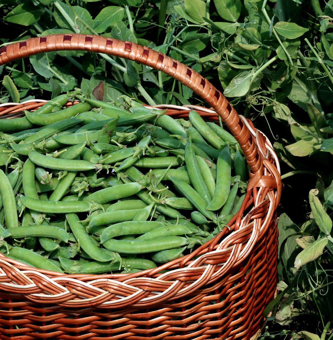 Image of peas in a basket