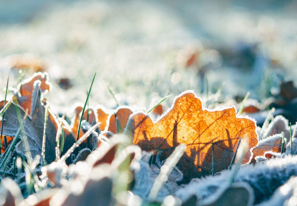 Image: frost of leaves and grass; Source: Chandana Ban, Unsplash