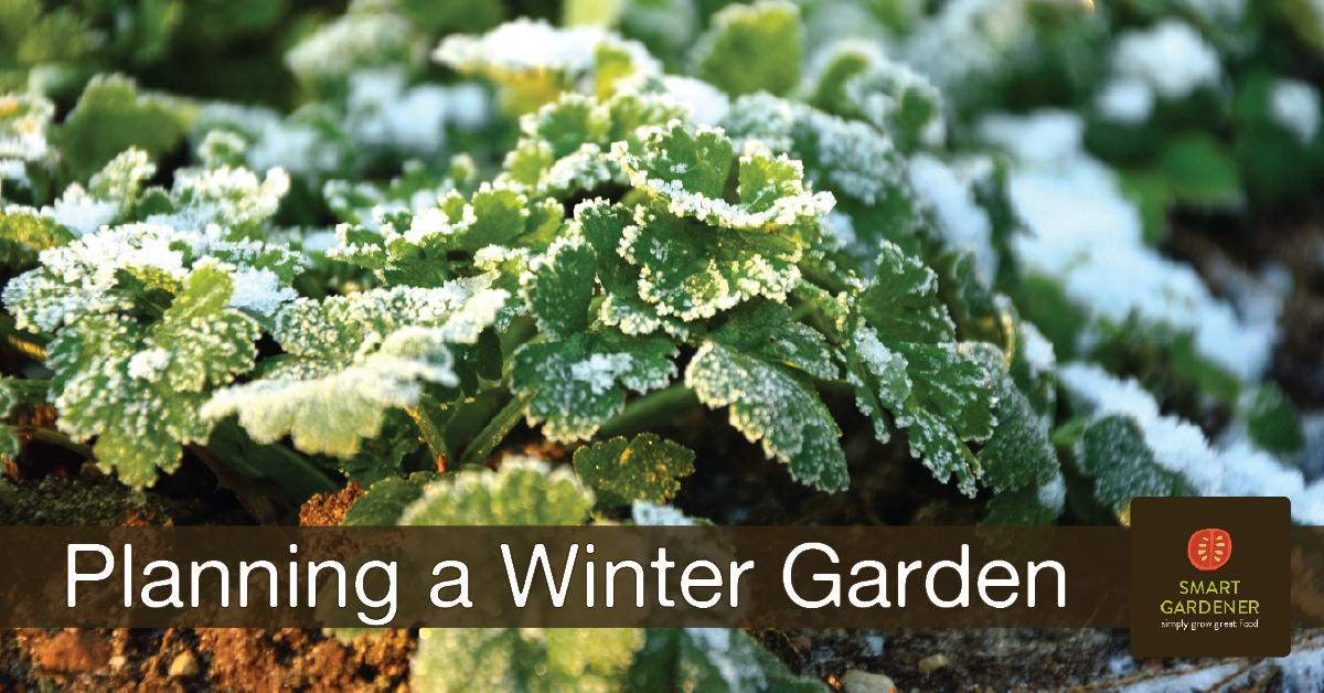 "Planning a Winter Vegetable Garden image of parsley with frost, with the text ""Planning a Winter Garden"" and the Smart Gardener logo"
