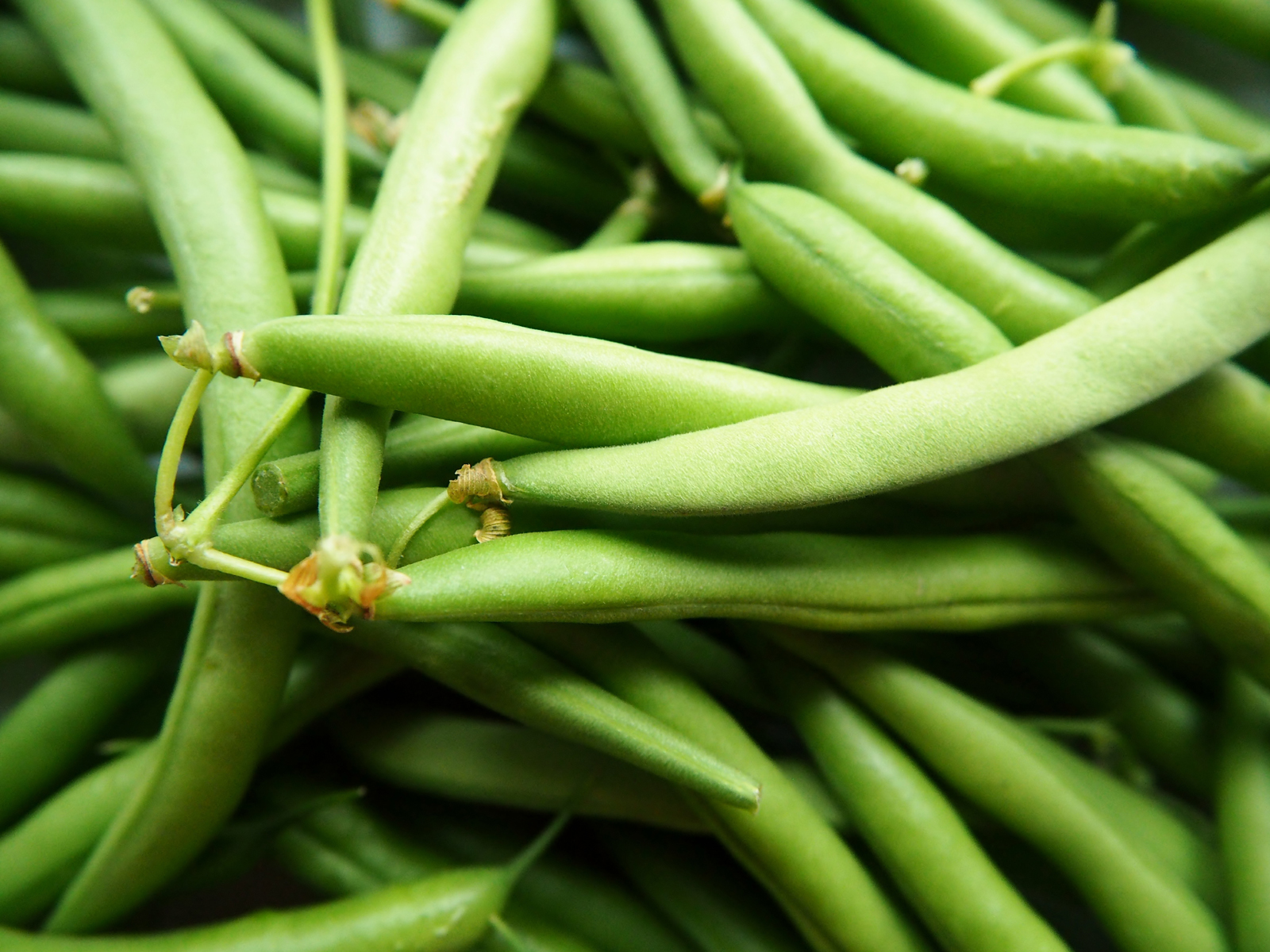 what can I grow now image of green beans