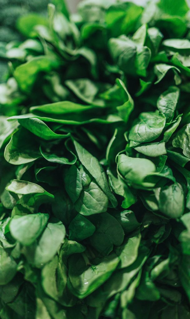 Tips for Growing Spinach - mature spinach plants